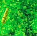 green-biotech